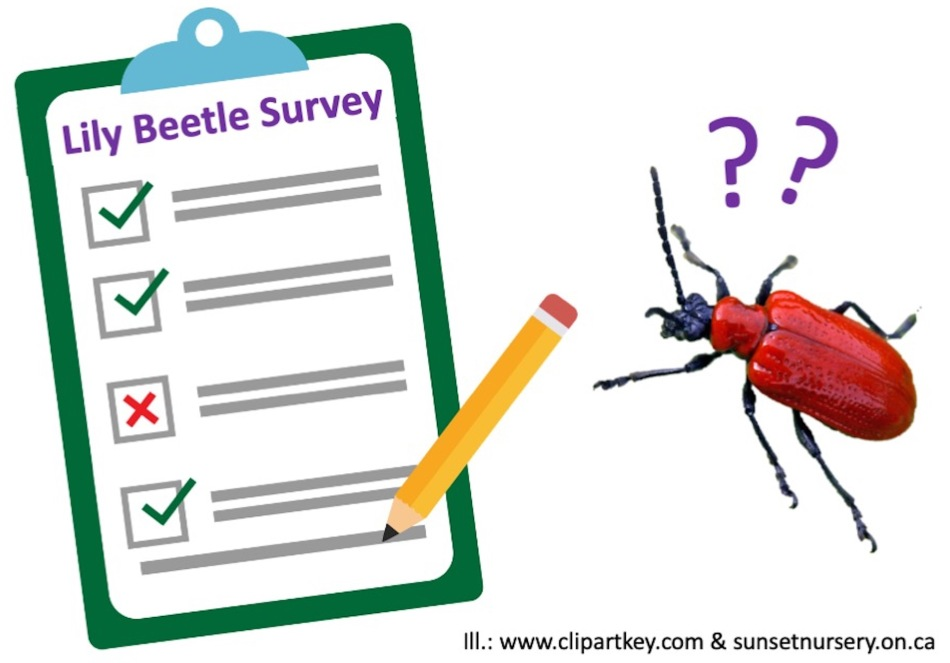 Illustration showing survey to be filled in with image of red lily beetle looking on.