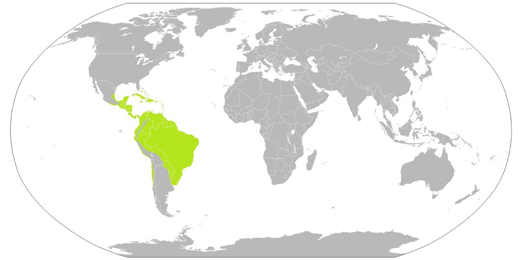Map showing distribution of dieffenbachias in the wild.