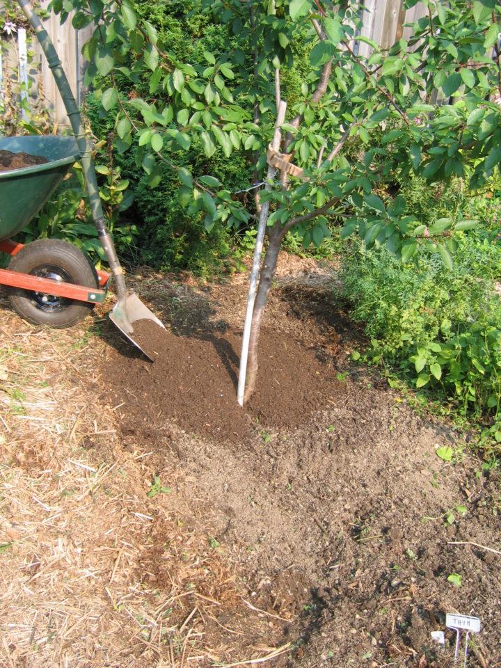 Plantation of a tree