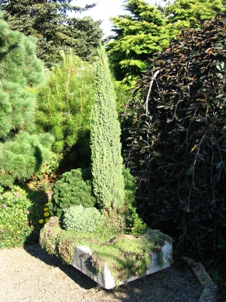 Jardin miniature dans une auge de hypertufa.