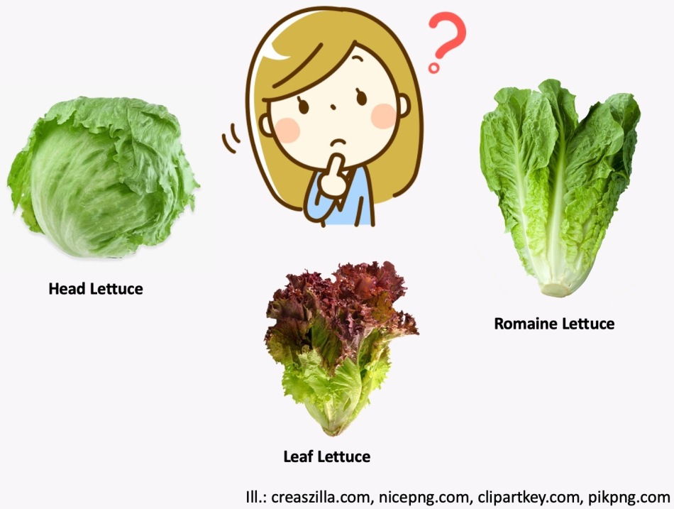 Woman looking doubtful, examining 3 types of lettuce: head, leaf and romaine.