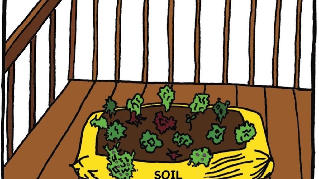 Vegetable garden in a bag of soil on a balcony.
