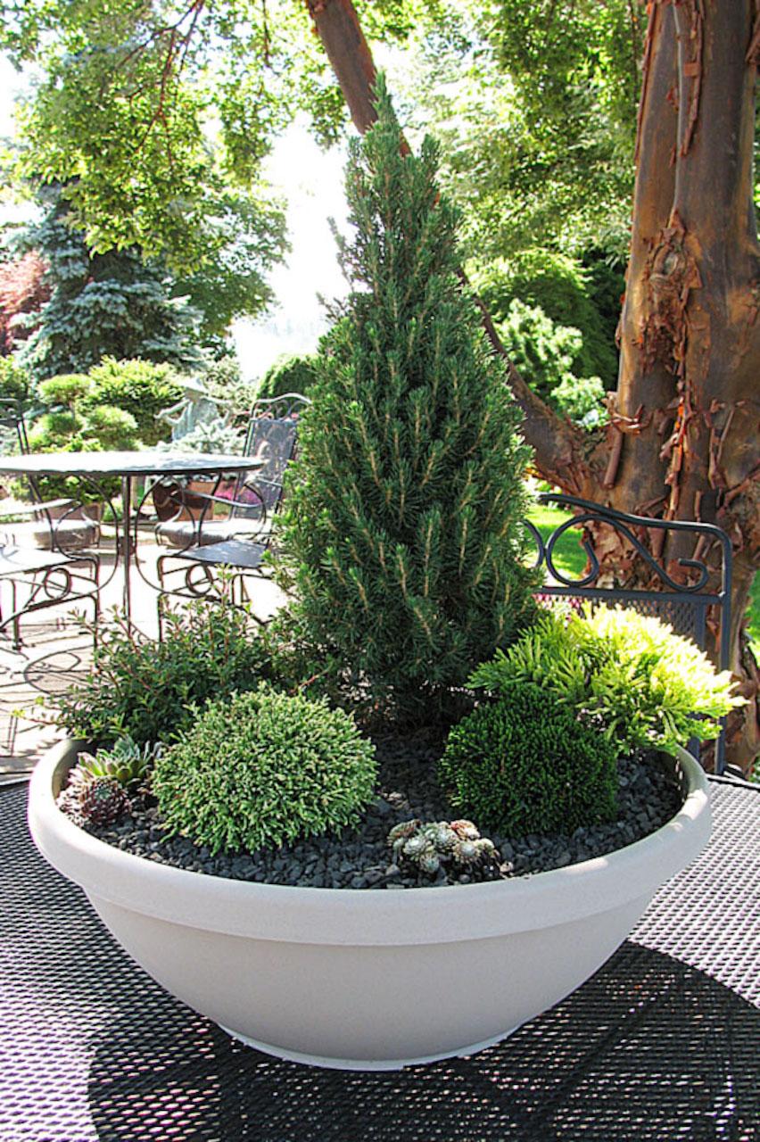 Jardin de conifères miniatures en pot.