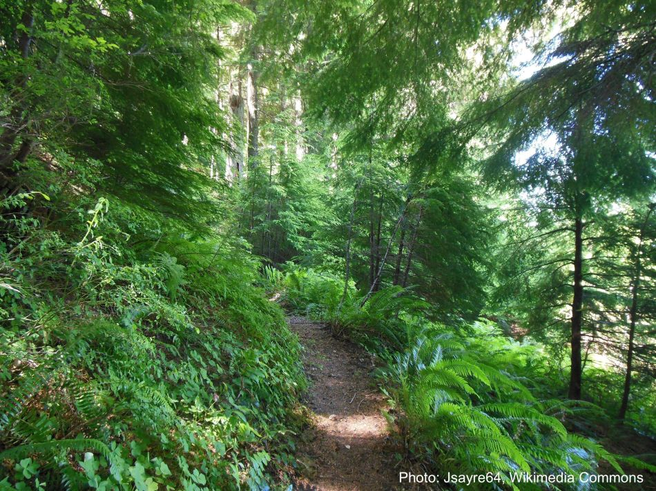 Natural forest with path