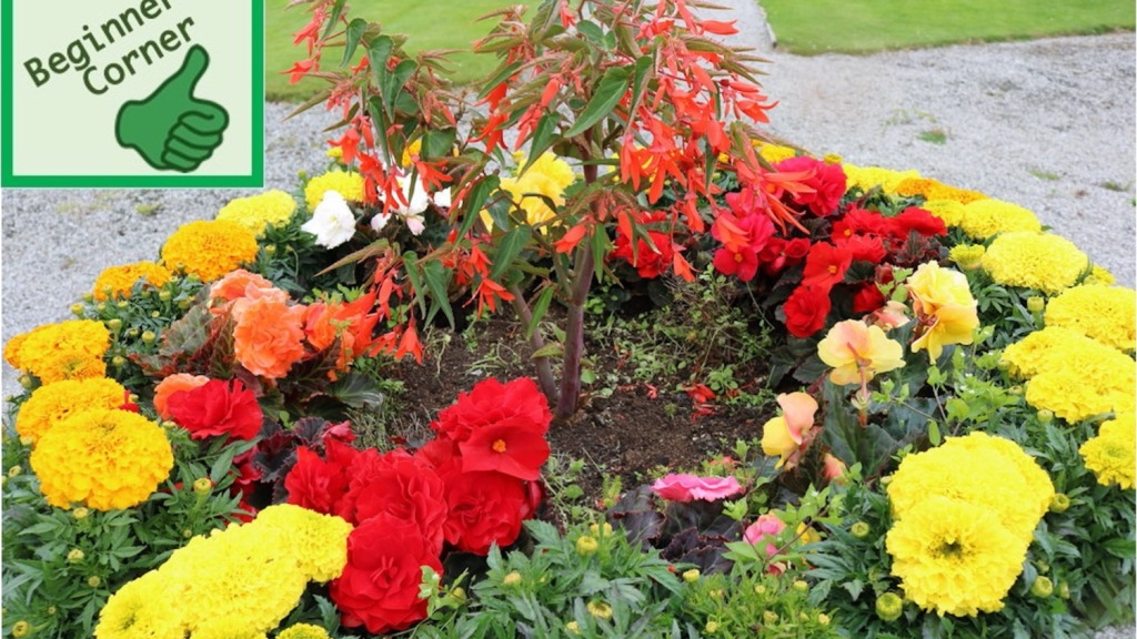 Small flower bed with annuals.