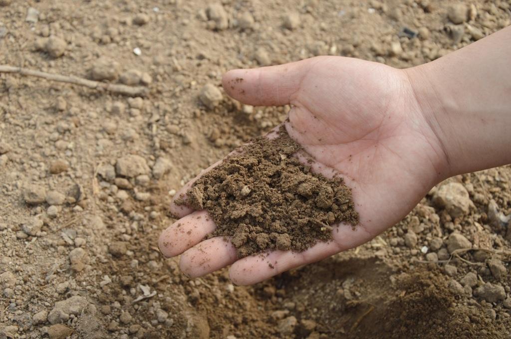 Hand holding soil from garden.