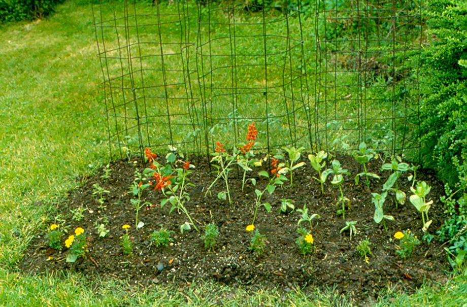 Freshly planted garden.