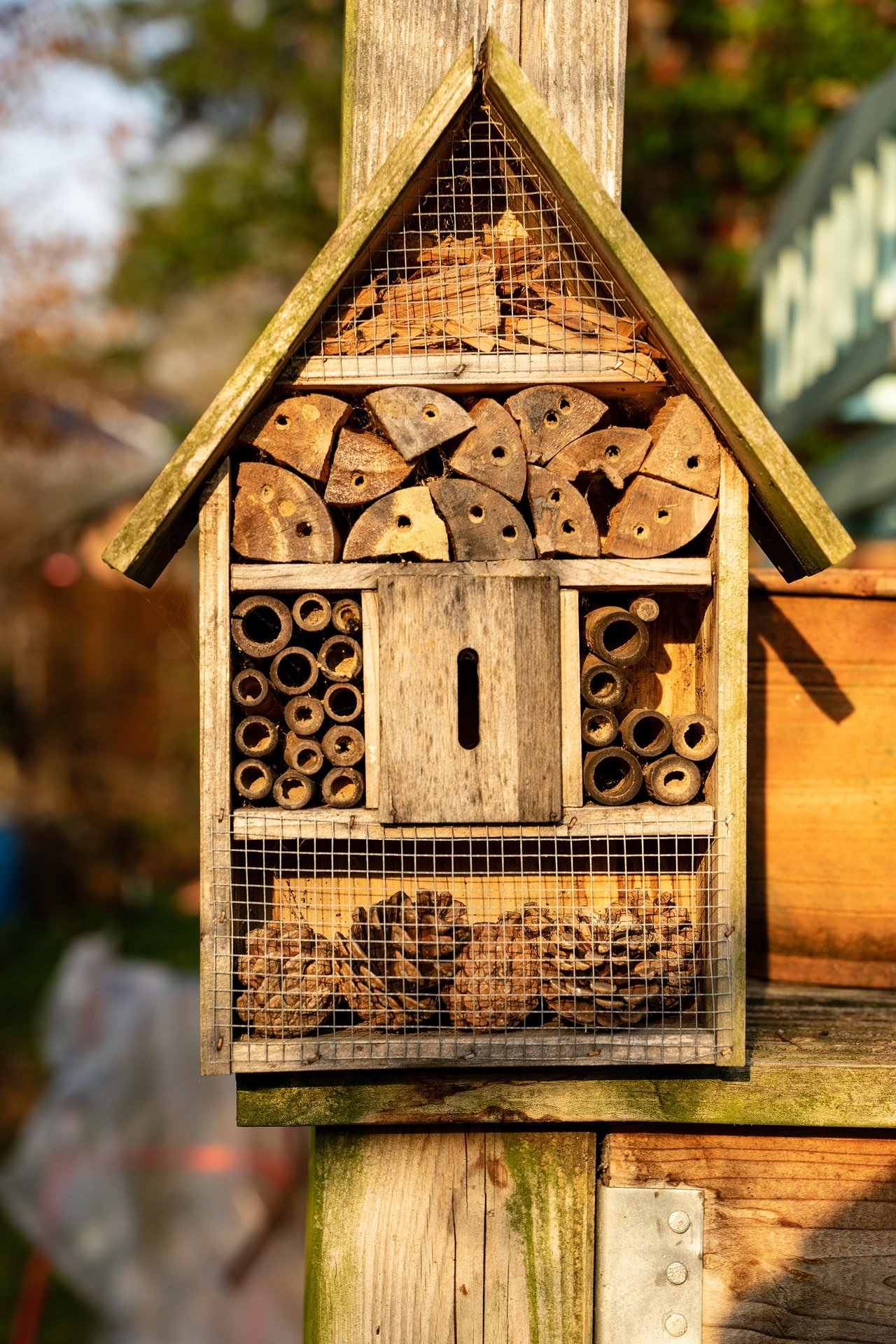 Bee hotel on post.
