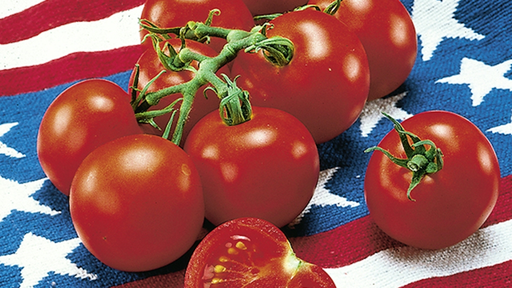 Fourth of July tomatoes on an American flag.