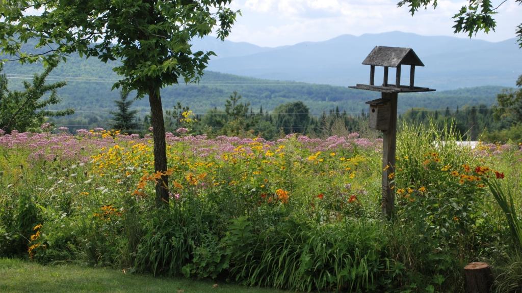 16-year-old wildflower meadow.