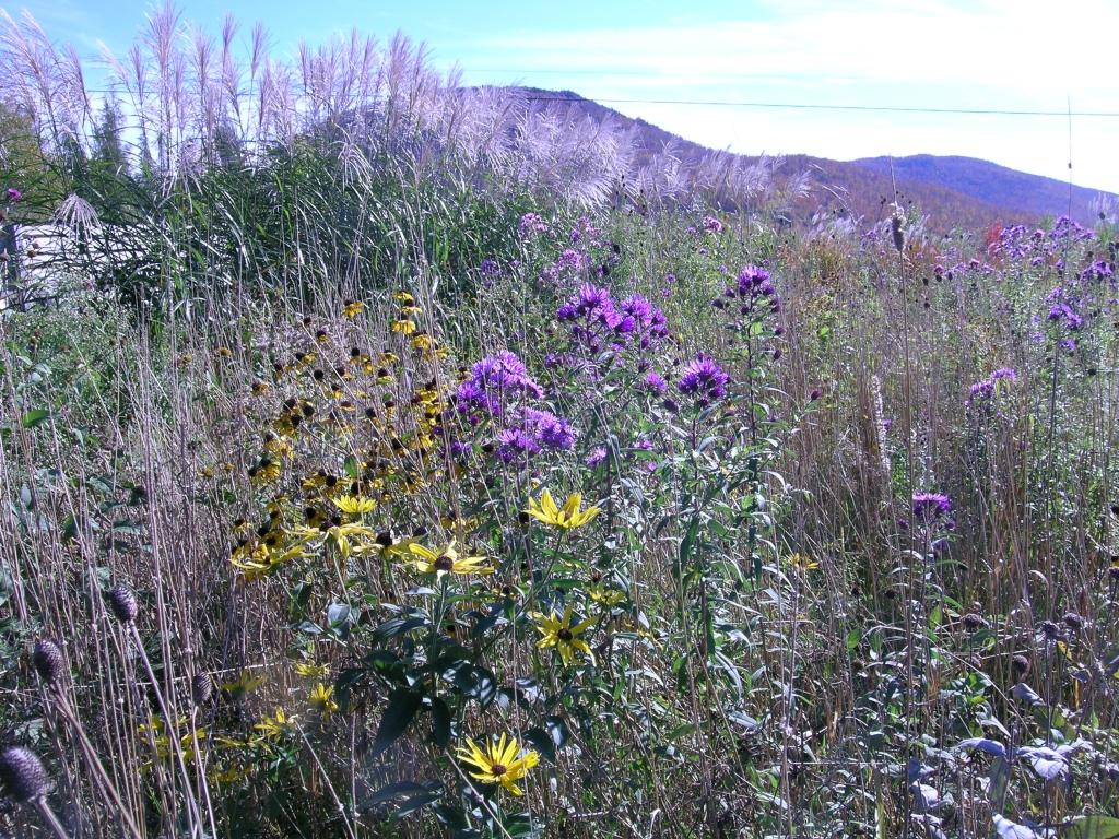 Flowers blooming in November