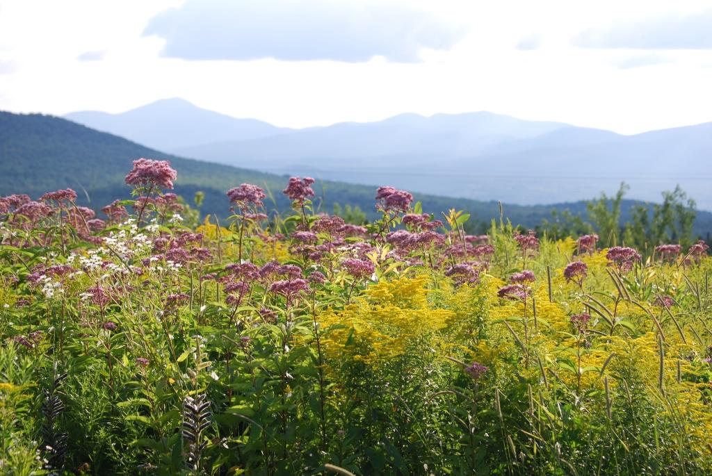 Native flowers in a wildflower meadow.